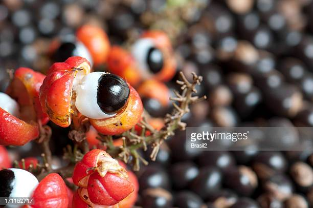 Guarana fruit and seeds