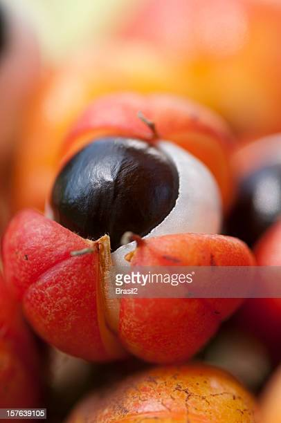 Guarana fruits frais