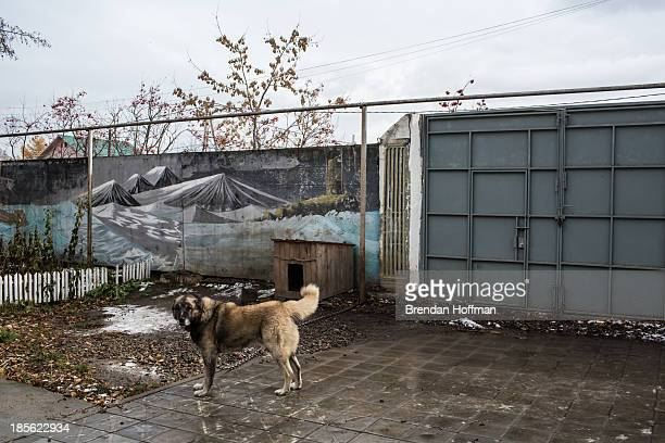 A guard dog stands in front of a mural painted by patients at City Without Drugs on October 16 2013 in Yekaterinburg Russia City Without Drugs is a...