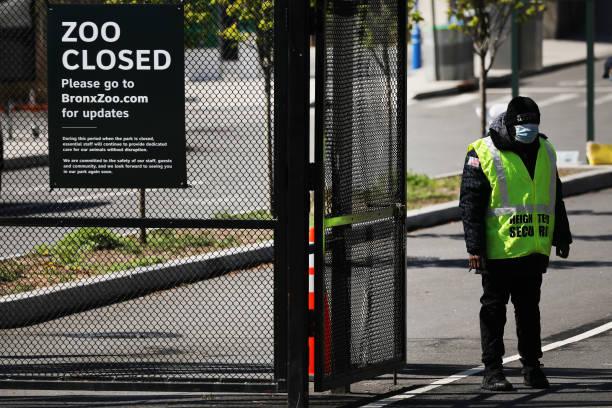 NY: Tiger At Bronx Zoo Tests Positive For Coronavirus