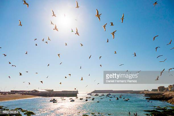 a guarda seaport with seagulls flying in a clear day - sturbridge stock photos and pictures