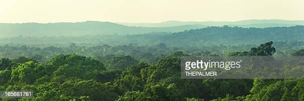 guatemala forêt