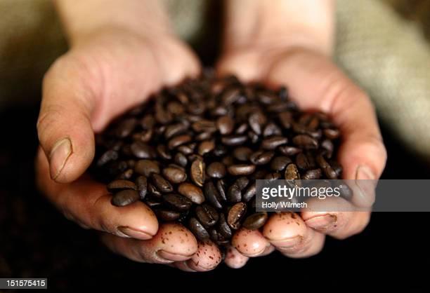 guatemalan coffee beans - グアテマラ ストックフォトと画像