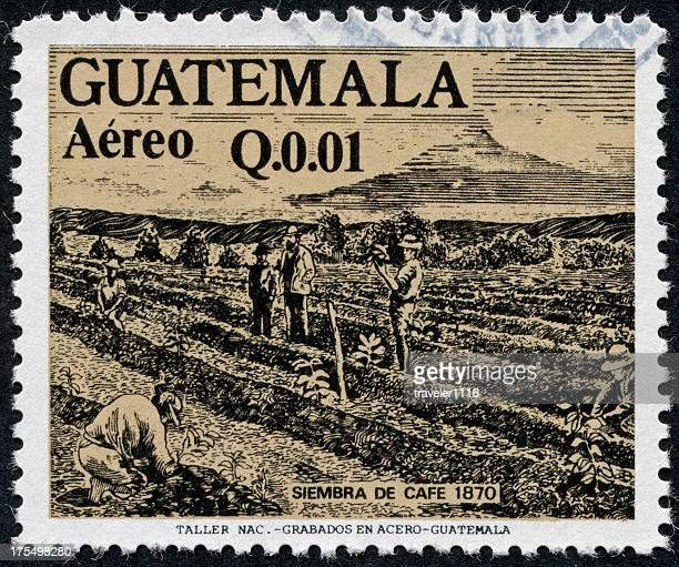 Guatemalan Coffee Stamp