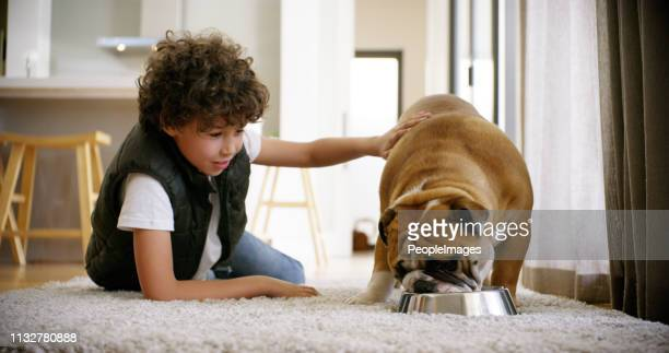 i guess we share a similar appetite - pet equipment stock pictures, royalty-free photos & images