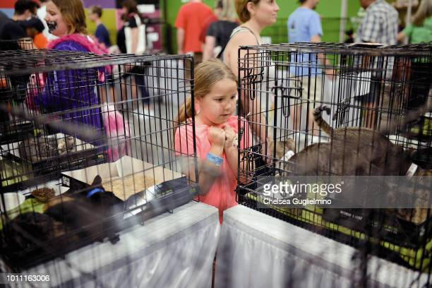 A guest looks at cats up for adoption at CatCon Worldwide 2018 at Pasadena Convention Center on August 4 2018 in Pasadena California
