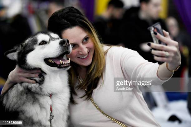 Guest takes a selfie with an Alaskan Malamute during the Meet The Breed event at Piers 92/94 ahead of the 143rd Westminster Kennel Club Dog Show on...