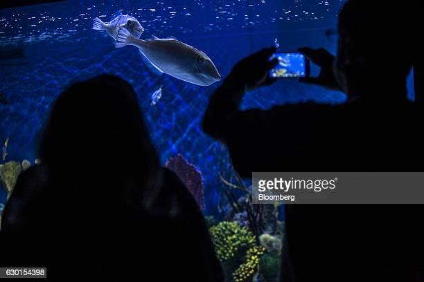 A guest takes a smartphone photograph as fish swim inside a tank at AquaRio South America's largest aquarium in Rio de Janeiro Brazil on Saturday Dec...