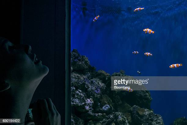 A guest views a tank filled with Anemonefish also know as clownfish at AquaRio South America's largest aquarium in Rio de Janeiro Brazil on Saturday...
