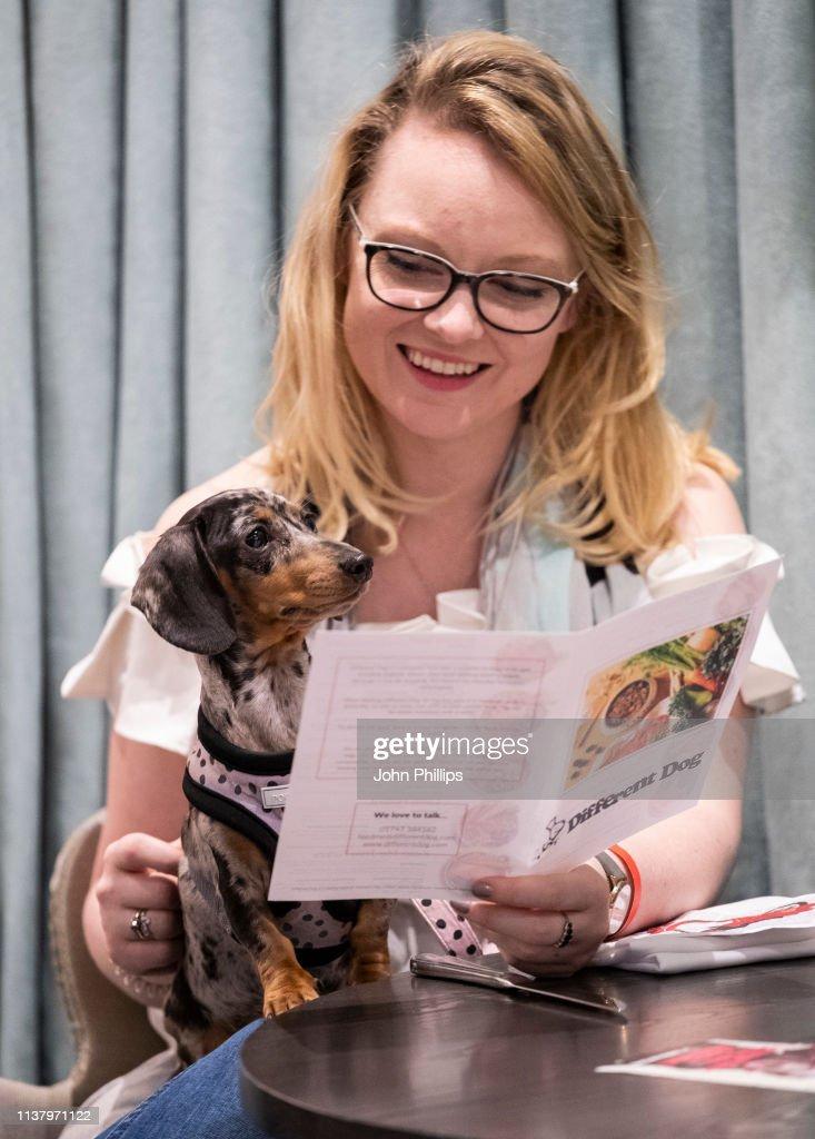 "GBR: ""A Sausage Dog Celebration"" - London Dog Week 2019"