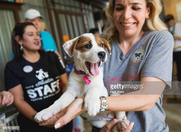 Guests enjoy 'Puppy Time' at Rachael Ray's Feedback House on March 16 2018 in Austin Texas