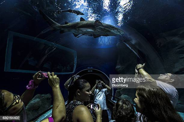 Guests inside an underwater tunnel take smartphone photographs as a grey nurse shark swims overhead at AquaRio South America's largest aquarium in...