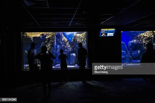 Guests look at lobsters inside a tank at AquaRio South America's largest aquarium in Rio de Janeiro Brazil on Saturday Dec 3 2016 AquaRio houses 8000...