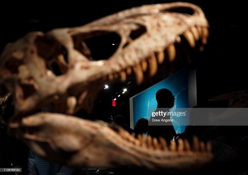New Exhibition At NYC's Museum Of Natural History Celebrates Tyrannosaurus Rex : News Photo