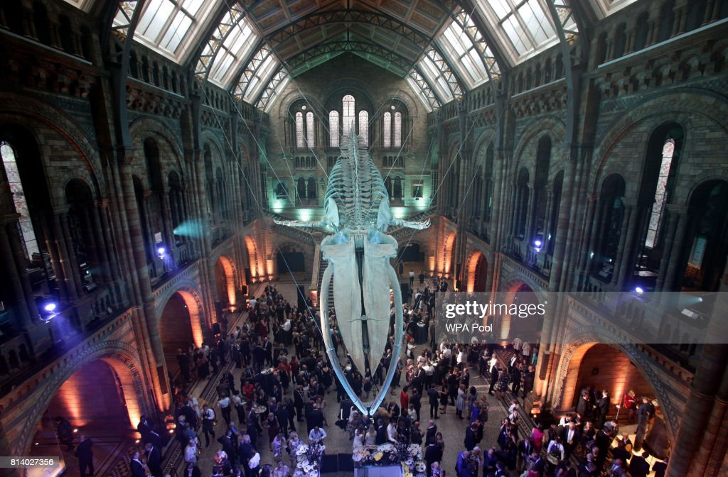 Guests mingle below a blue whale skeleton named Hope during the reopening of Hintze Hall at the Natural History Museum on July 13, 2017 in London, England..