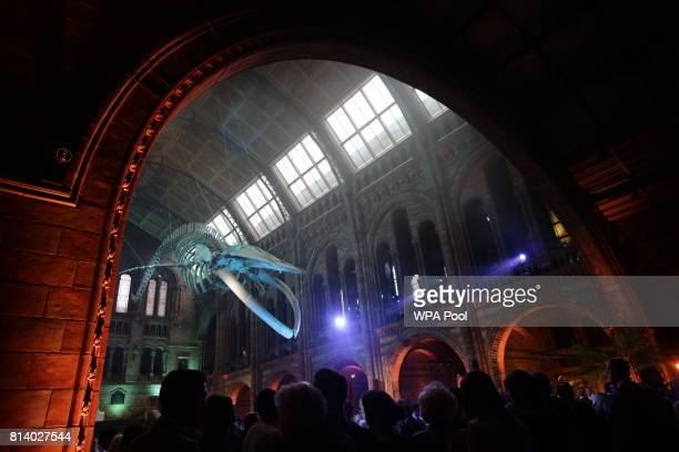 Guests mingle below a blue whale skeleton named Hope during the reopening of Hintze Hall at the Natural History Museum on July 13 2017 in London...