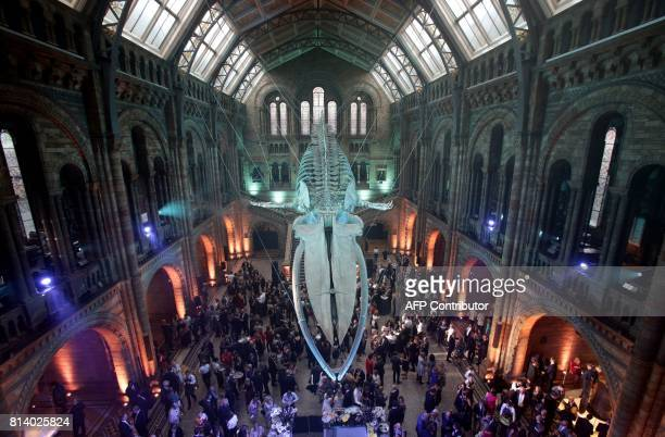 Guests mingle beneath a blue whale skeleton on display as part of the reopening of Hintze Hall at the Natural History Museum in London on July 13...