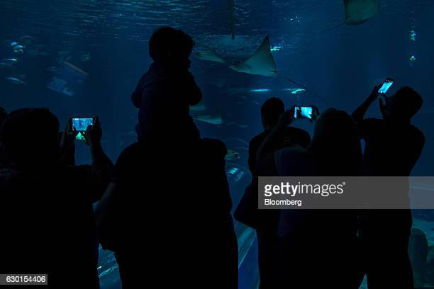 Guests take smartphone photographs as manta rays swim inside a tank at AquaRio South America's largest aquarium in Rio de Janeiro Brazil on Saturday...