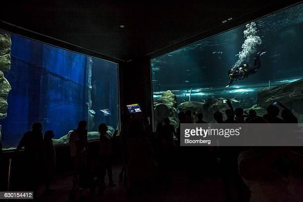 Guests watch as a scuba diver swims inside a tank at AquaRio South America's largest aquarium in Rio de Janeiro Brazil on Saturday Dec 3 2016 AquaRio...