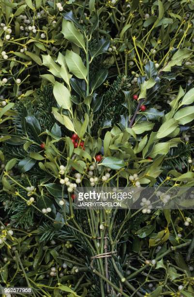 gui et houx marche de Noel departement HautRhin region Alsace France mistletoe and holly Christmas market HautRhin Alsace France