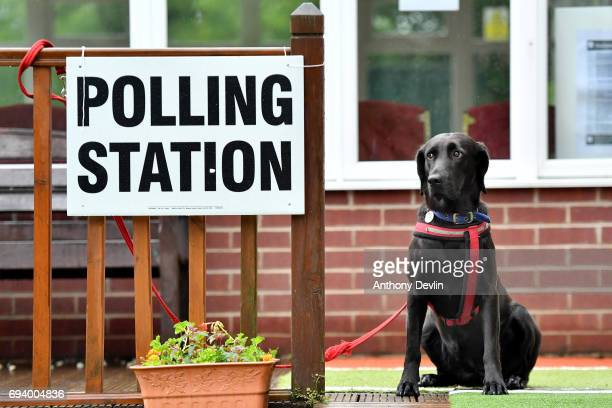 Guia a Labrador rescued from Ecuador waits outside a polling station in Stalybridge on June 8 2017 in Greater Manchester United Kingdom Polling...