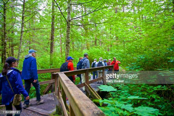 guide and participants on rainforest nature hike prince rupert, british columbia - barry wood stock pictures, royalty-free photos & images