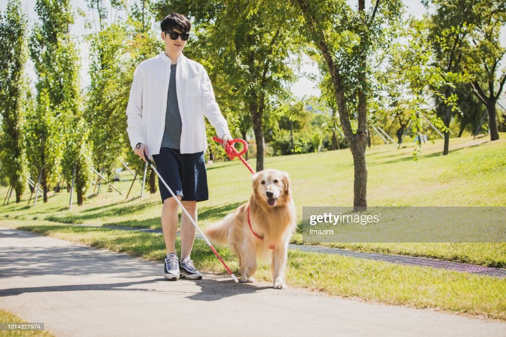A guide dog and blind man taking a walk : Stock Photo