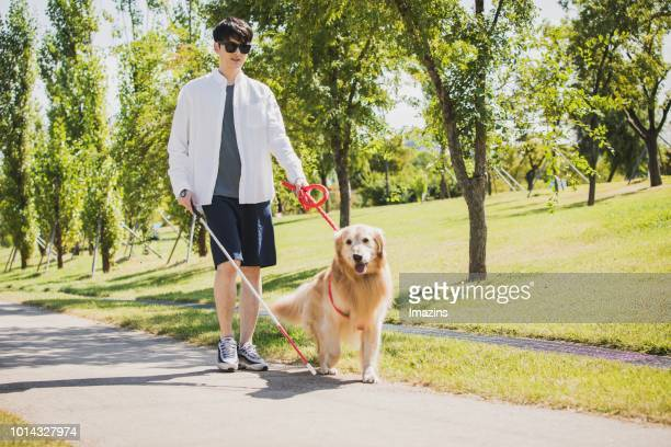 A guide dog and blind man taking a walk
