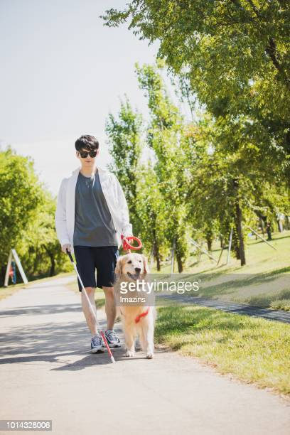 a guide dog and blind man taking a walk - guide dog stock photos and pictures
