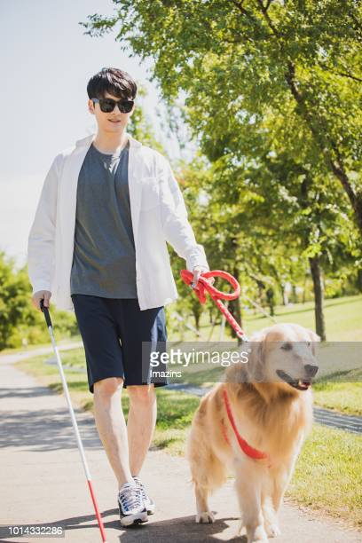a guide dog and blind man taking a walk - 盲導犬 ストックフォトと画像