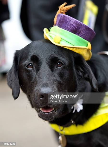 Guide dog in a hat attends Ladies Day of Royal Ascot 2012 at Ascot Racecourse on June 21, 2012 in Ascot, United Kingdom.