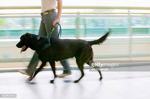 Guide Dog Leading Owner