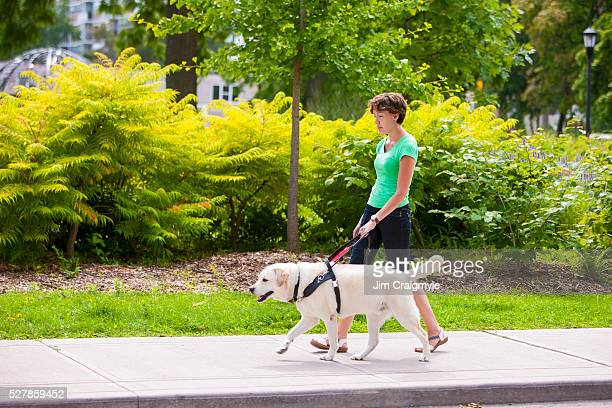 guide dog leading young woman on city side walk. - 盲目 ストックフォトと画像