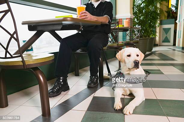 Guide Dog Resting on Floor by Owner