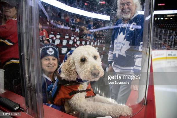 A guide dog watches warm ups before an NHL game where the Calgary Flames hosted the Toronto Maple Leafs on March 4 at the Scotiabank Saddledome in...