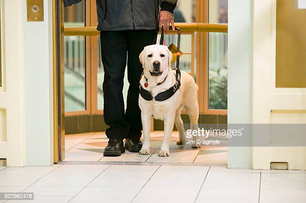 Guide Dog with Owner on Elevator