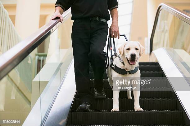 Guide Dog with Owner on Escalator