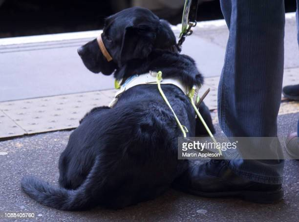 Guide Dog2