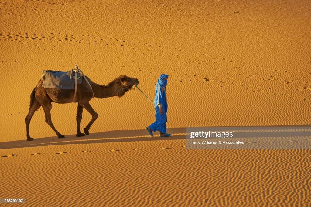 Guide leading camel on sand dune : Foto stock