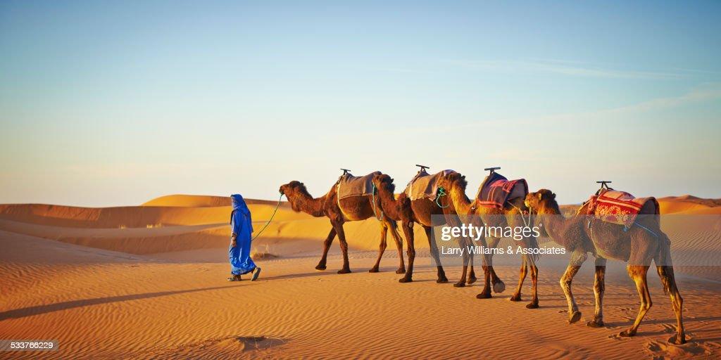 Guide leading camels on sand dune in desert landscape : Foto stock