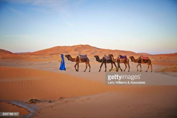 Guide leading camels on sand dunes in desert landscape