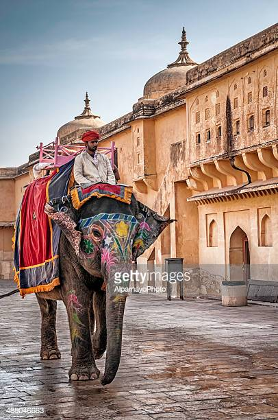 guide riding his elephant exiting amber fort in jaipur, india - amber fort stockfoto's en -beelden