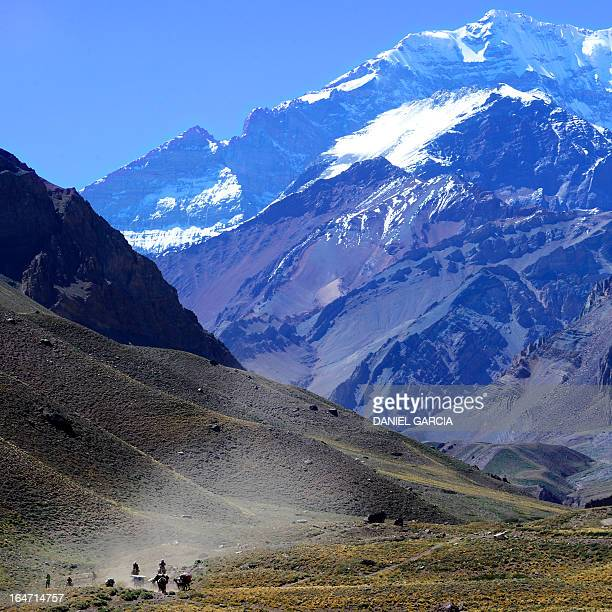 A guide with burdened mules comes down from the Aconcagua mountain on February 2 2013 The Aconcagua is the highest mountain of the Americas the...