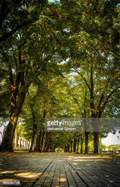 guidelines - avenue stock pictures, royalty-free photos & images