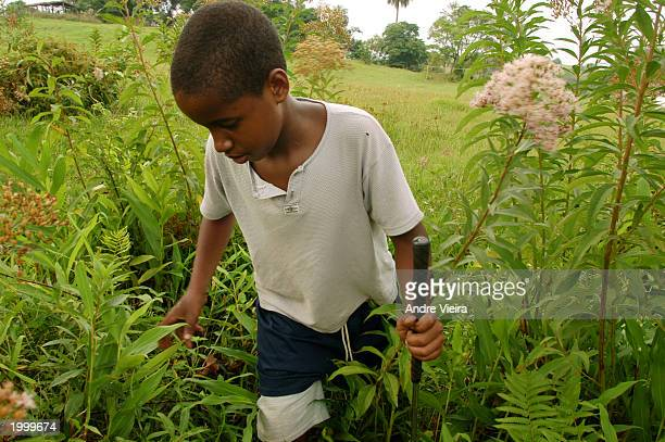 Guilherme Leo Silva playing golf after school looks for his only ball lost in the bushes that surround the course May 14 2003 at Japeri Municipal...