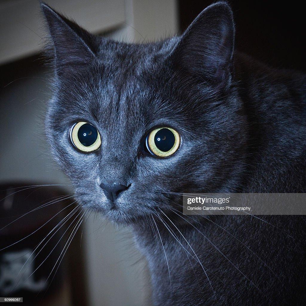 Guilty cat : Stock Photo