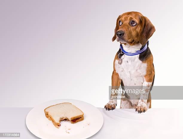 Guilty looking puppy near an eaten sandwich on a white plate
