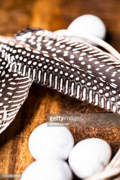 guinea fowl feathers - guinea fowl stock pictures, royalty-free photos & images