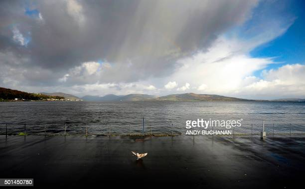 A gul lands on the quayside in the town of Rothesay on the Isle Of Bute an island off of the west coast of Scotland on December 11 2015 From wartorn...