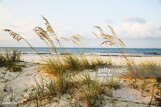 gulf coast white sandy beaches - gulf shores alabama stock pictures, royalty-free photos & images